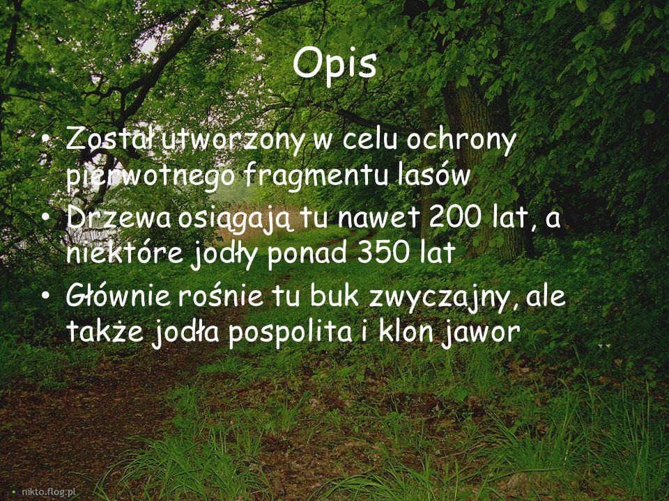 Opis Został utworzony w celu ochrony pierwotnego fragmentu lasów