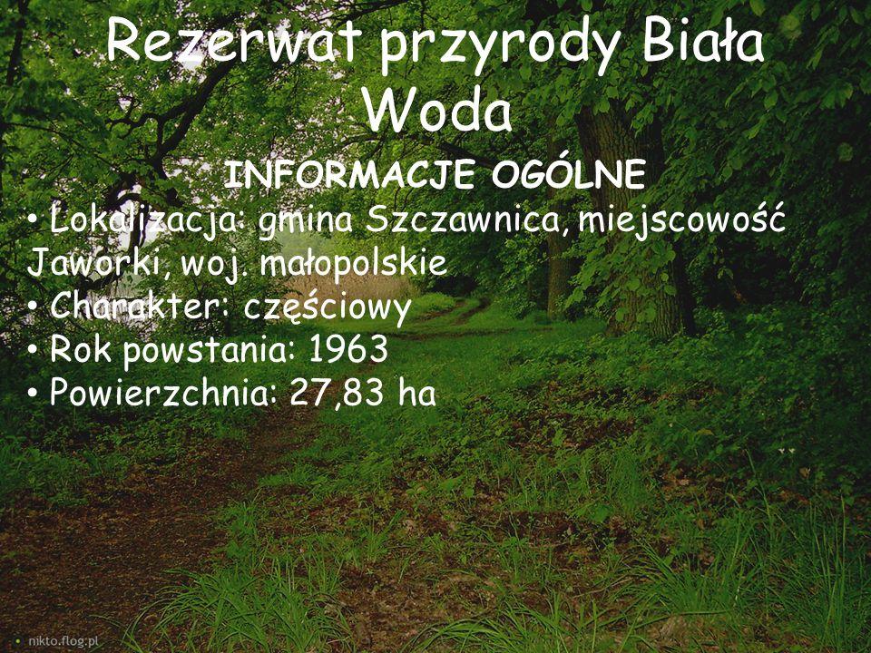 Rezerwat przyrody Biała Woda