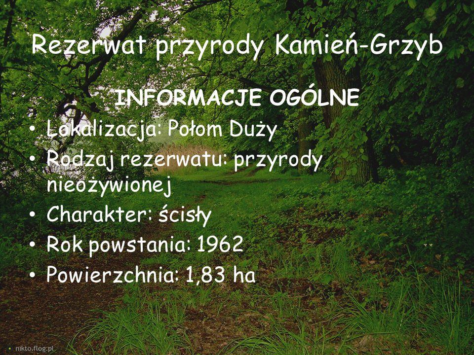 Rezerwat przyrody Kamień-Grzyb