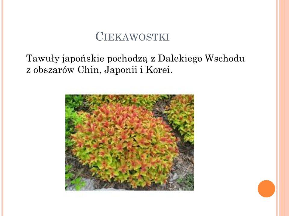 Ciekawostki Tawuły japońskie pochodzą z Dalekiego Wschodu z obszarów Chin, Japonii i Korei.