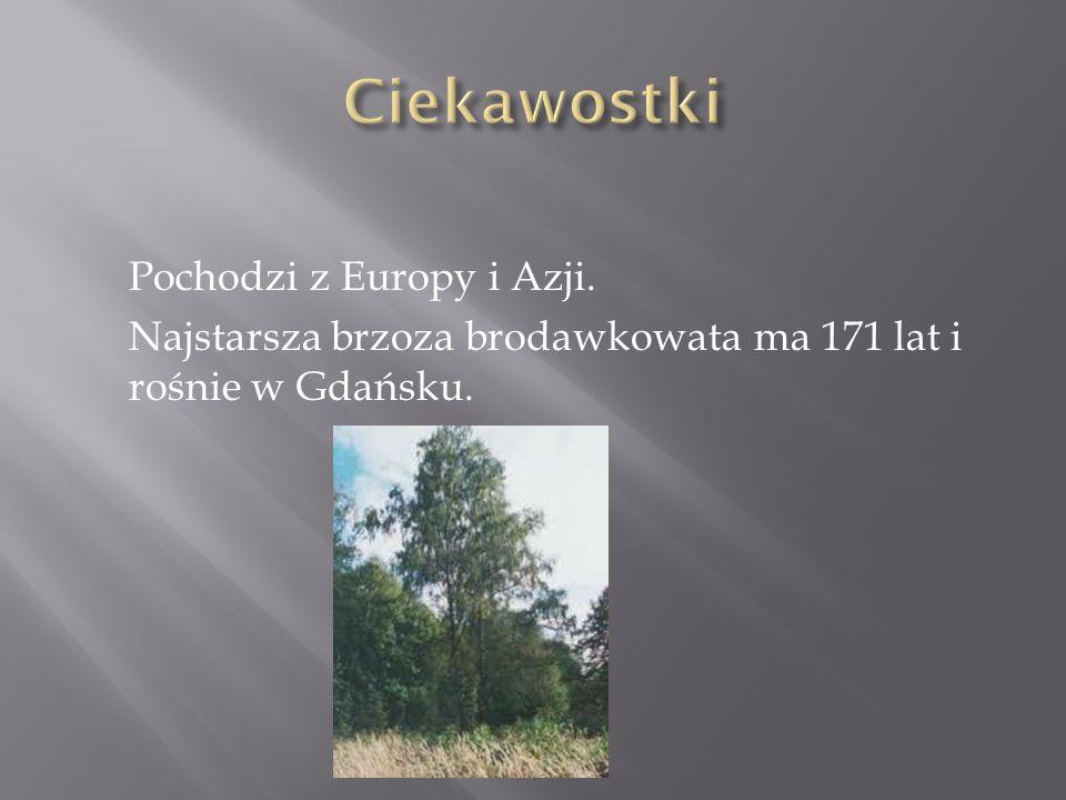 Ciekawostki Pochodzi z Europy i Azji. Najstarsza brzoza brodawkowata ma 171 lat i rośnie w Gdańsku.