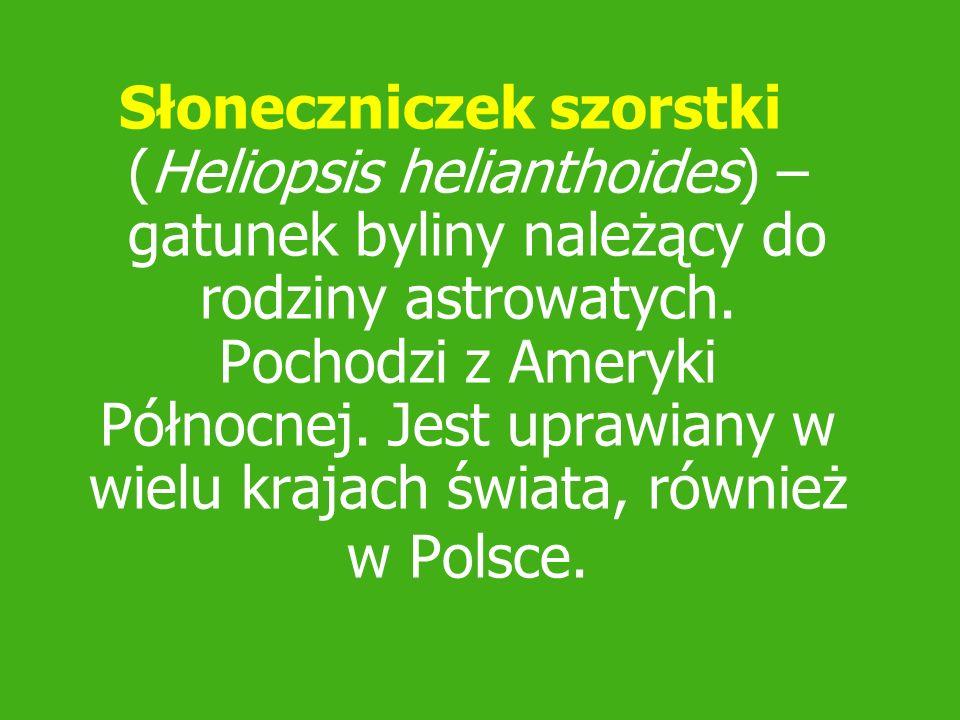 Słoneczniczek szorstki (Heliopsis helianthoides) – gatunek byliny należący do rodziny astrowatych.