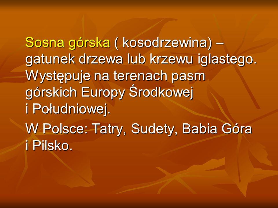 W Polsce: Tatry, Sudety, Babia Góra i Pilsko.