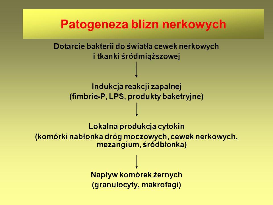 Patogeneza blizn nerkowych