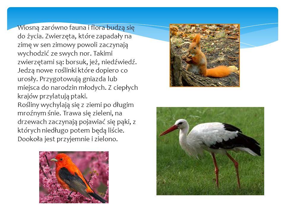 Wiosną zarówno fauna i flora budzą się do życia