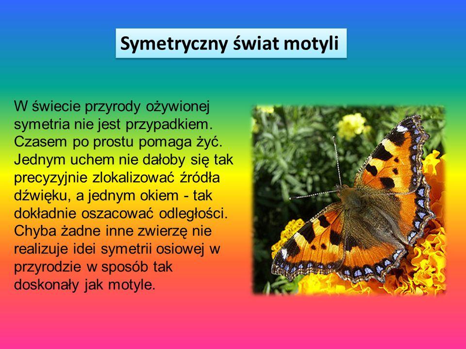 Symetryczny świat motyli