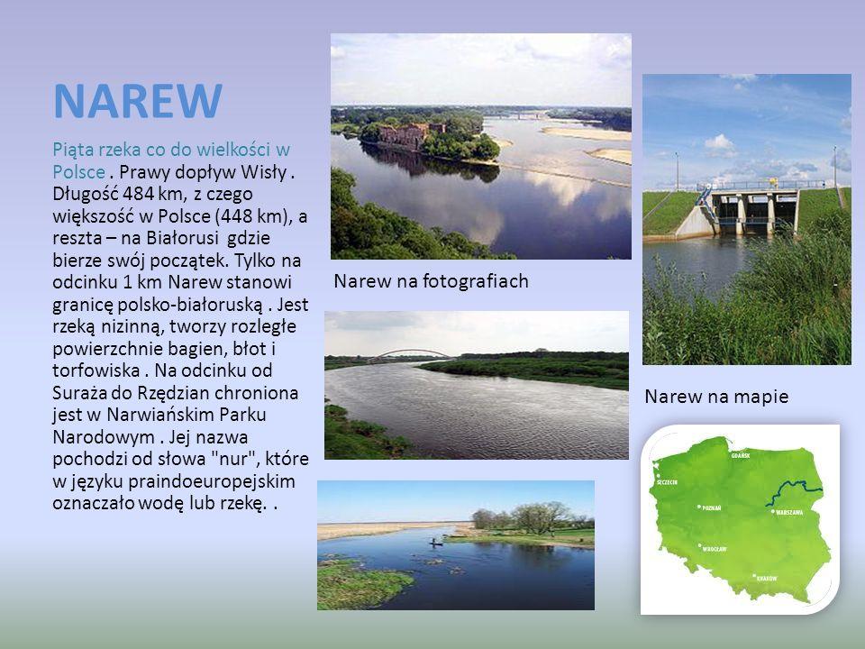 NAREW Narew na fotografiach Narew na mapie