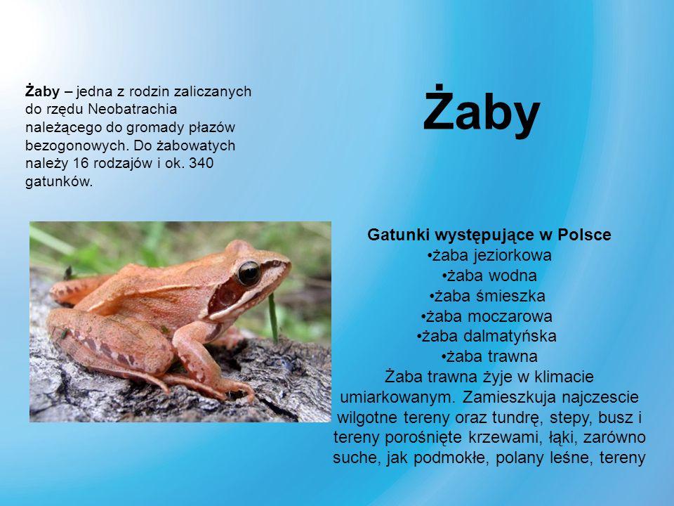 Gatunki występujące w Polsce