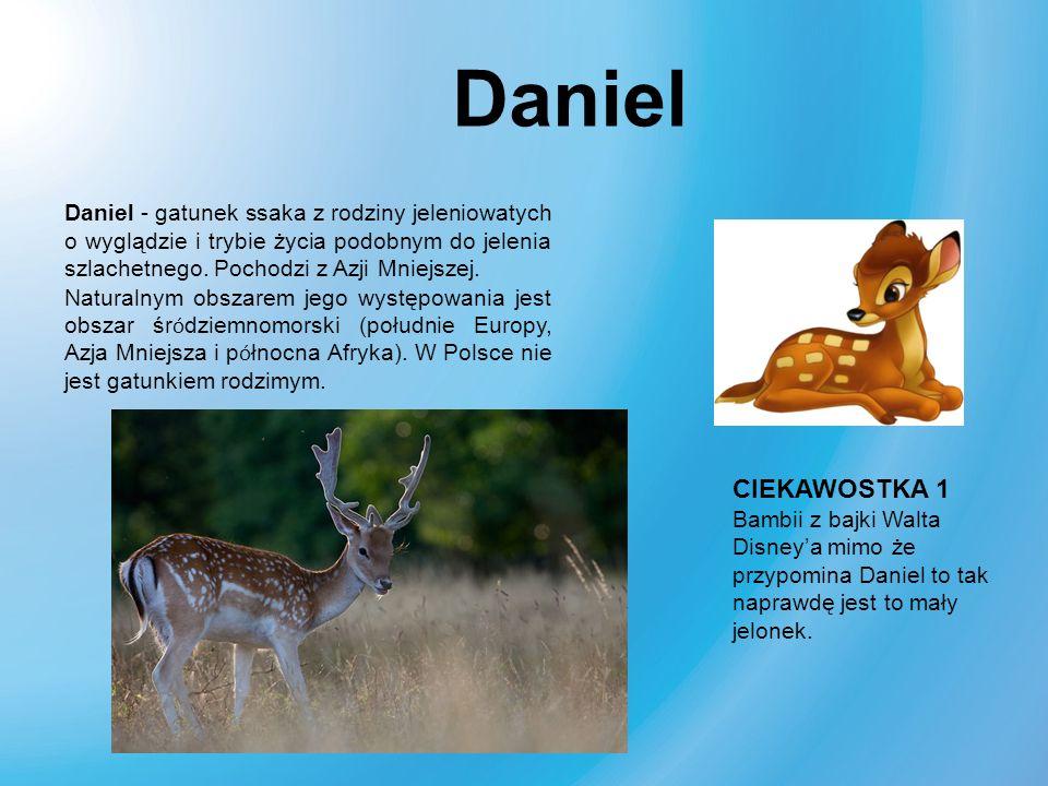 Daniel Daniel - gatunek ssaka z rodziny jeleniowatych o wyglądzie i trybie życia podobnym do jelenia szlachetnego. Pochodzi z Azji Mniejszej.