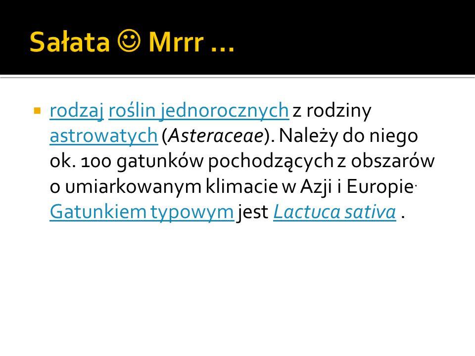 Sałata  Mrrr …