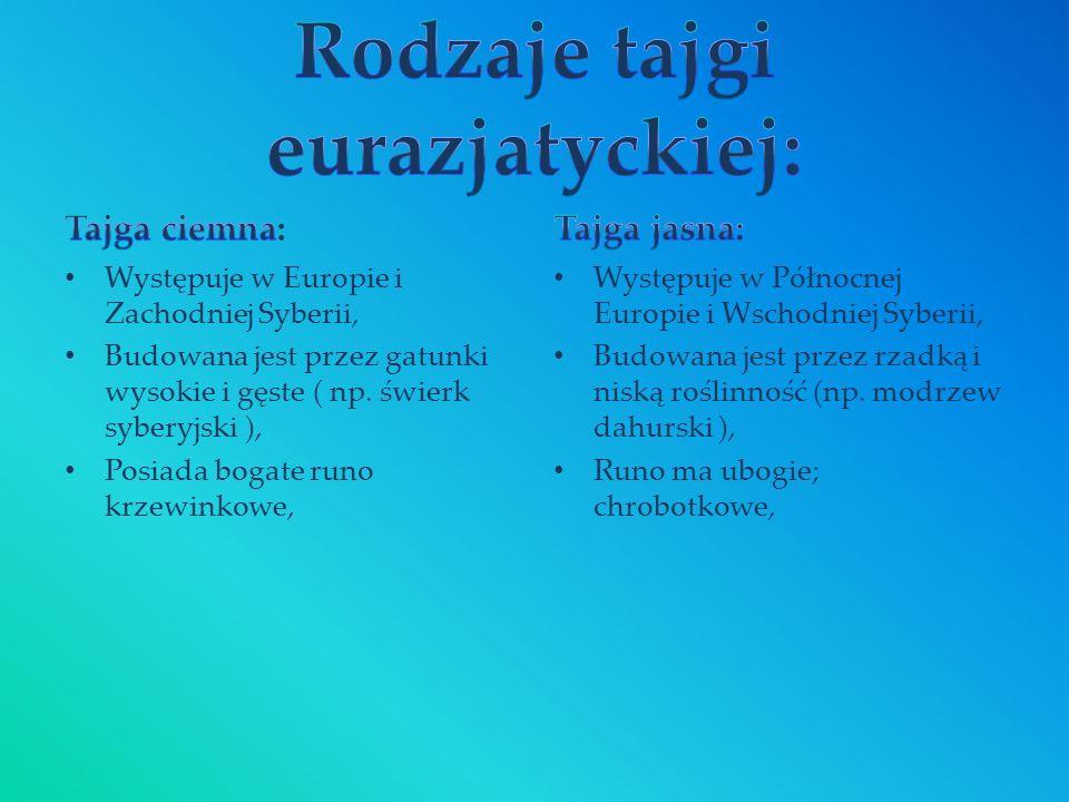 Rodzaje tajgi eurazjatyckiej: