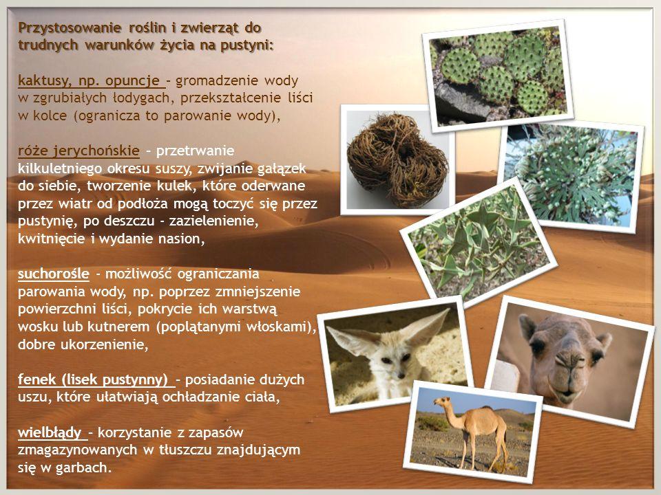 Przystosowanie roślin i zwierząt do trudnych warunków życia na pustyni: kaktusy, np.