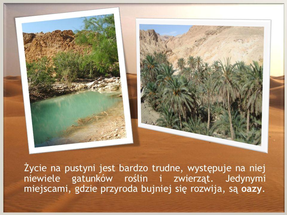 Życie na pustyni jest bardzo trudne, występuje na niej niewiele gatunków roślin i zwierząt.