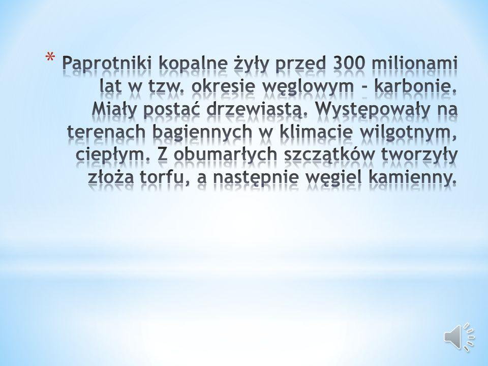 Paprotniki kopalne żyły przed 300 milionami lat w tzw