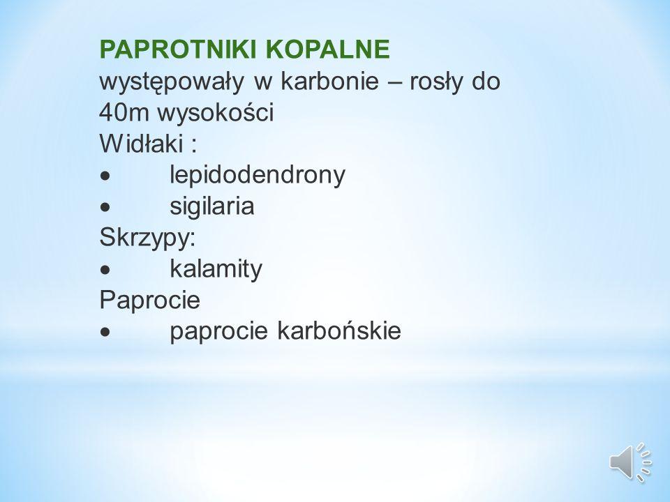 PAPROTNIKI KOPALNE występowały w karbonie – rosły do 40m wysokości. Widłaki : · lepidodendrony.