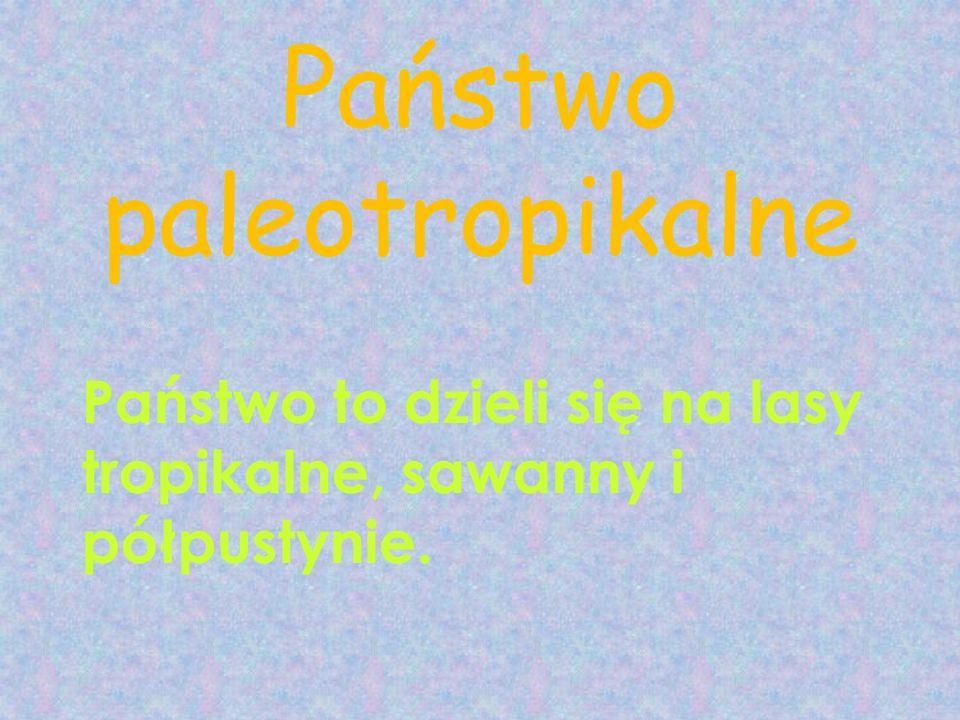 Państwo paleotropikalne