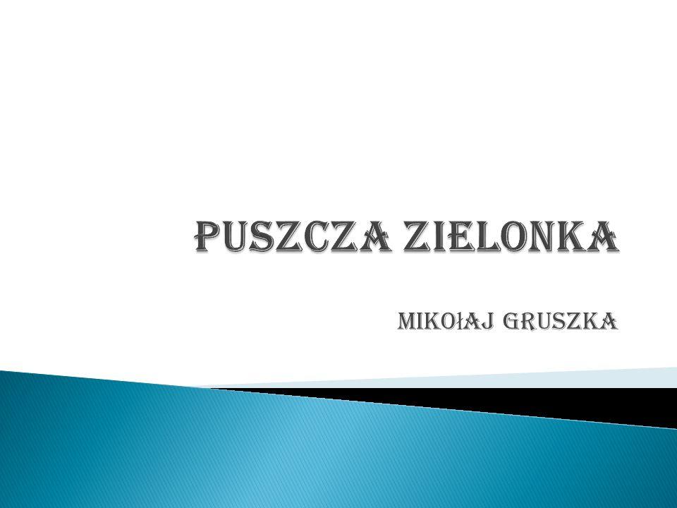 Puszcza Zielonka Mikołaj Gruszka