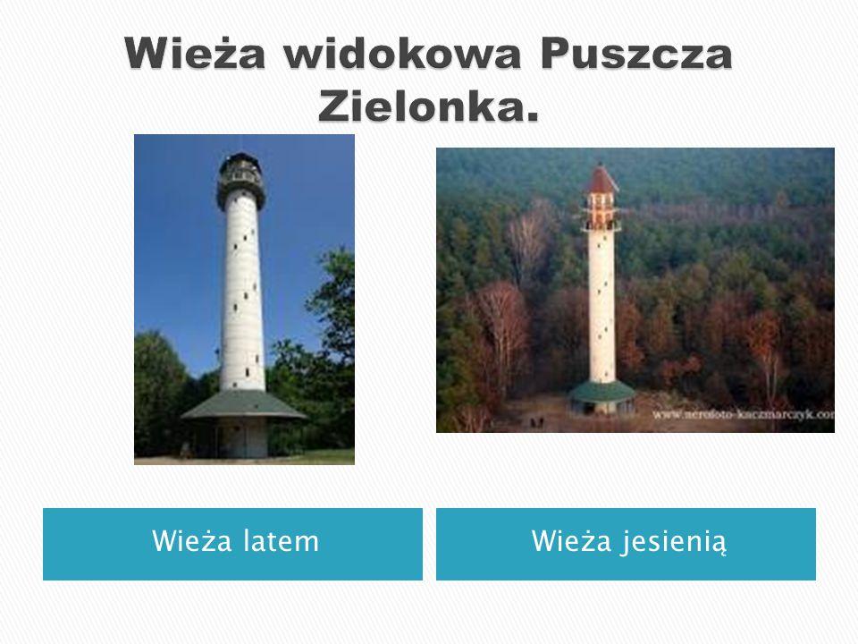 Wieża widokowa Puszcza Zielonka.