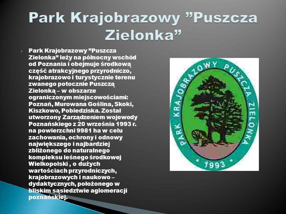 Park Krajobrazowy Puszcza Zielonka