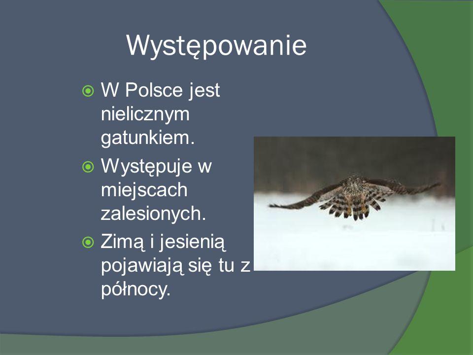 Występowanie W Polsce jest nielicznym gatunkiem.