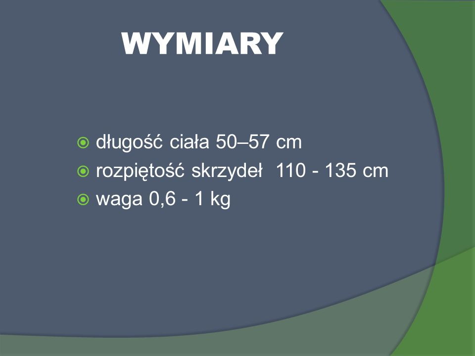 WYMIARY długość ciała 50–57 cm rozpiętość skrzydeł 110 - 135 cm