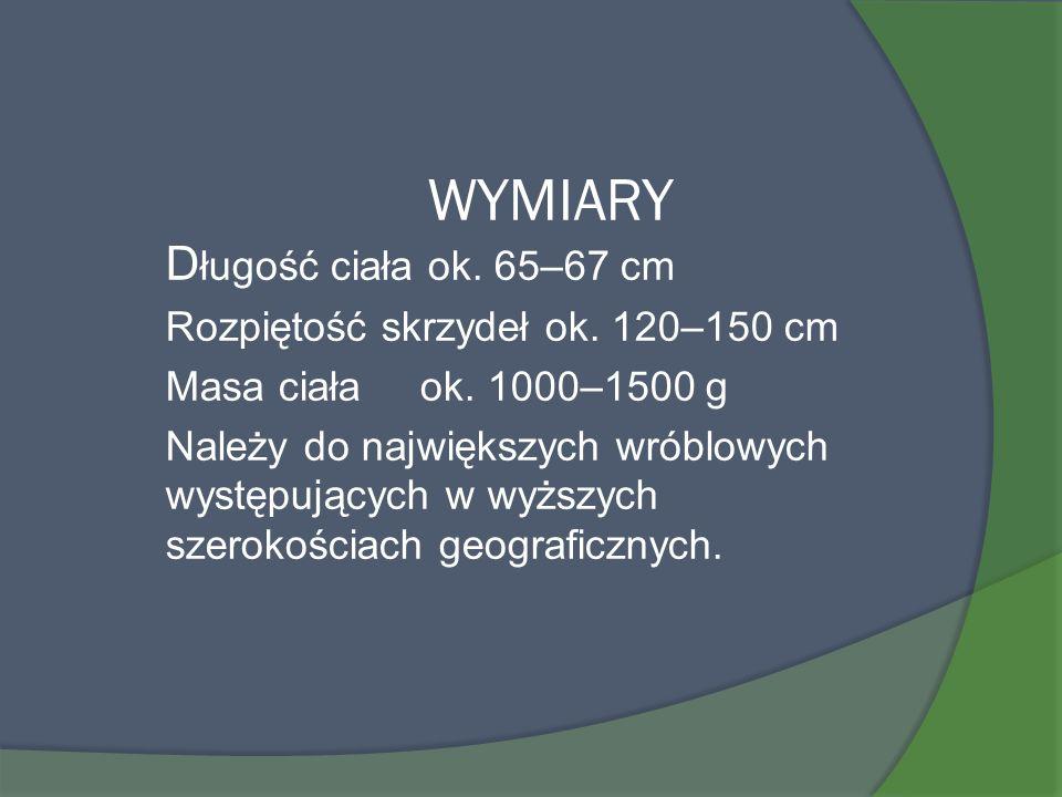 WYMIARY Długość ciała ok. 65–67 cm