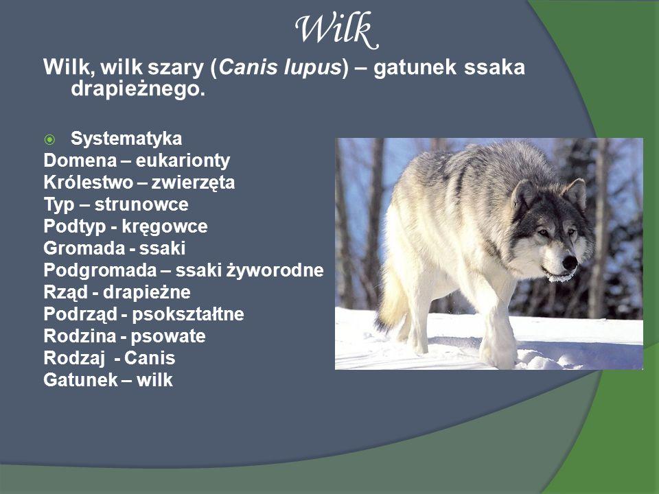 Wilk Wilk, wilk szary (Canis lupus) – gatunek ssaka drapieżnego.