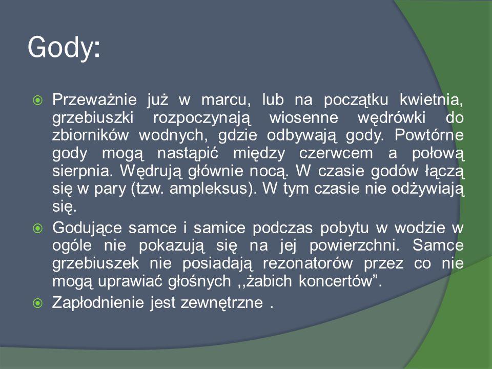 Gody: