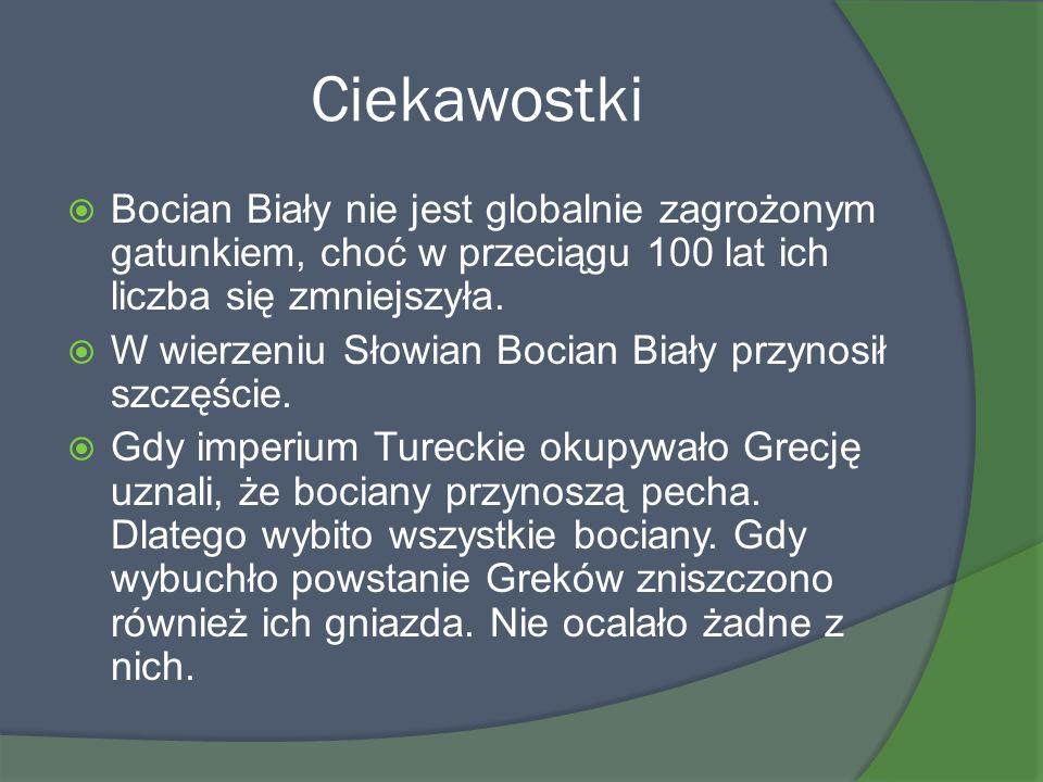 Ciekawostki Bocian Biały nie jest globalnie zagrożonym gatunkiem, choć w przeciągu 100 lat ich liczba się zmniejszyła.