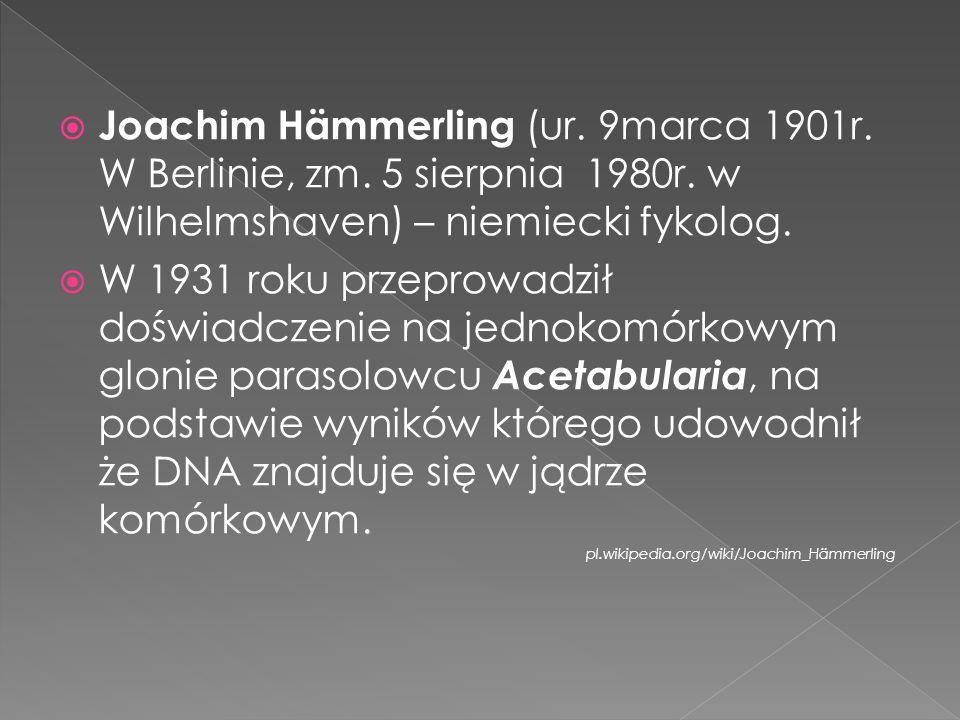 Joachim Hämmerling (ur. 9marca 1901r. W Berlinie, zm. 5 sierpnia 1980r