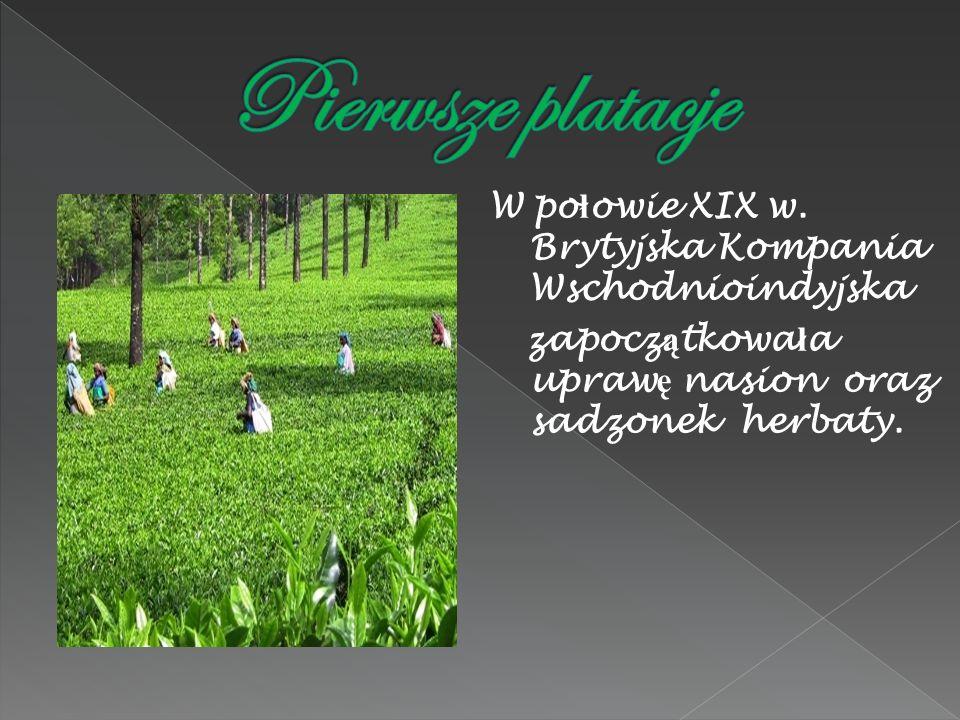 Pierwsze platacje W połowie XIX w.