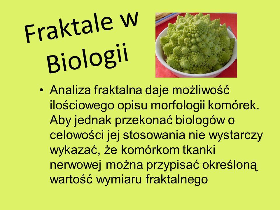 Fraktale w Biologii