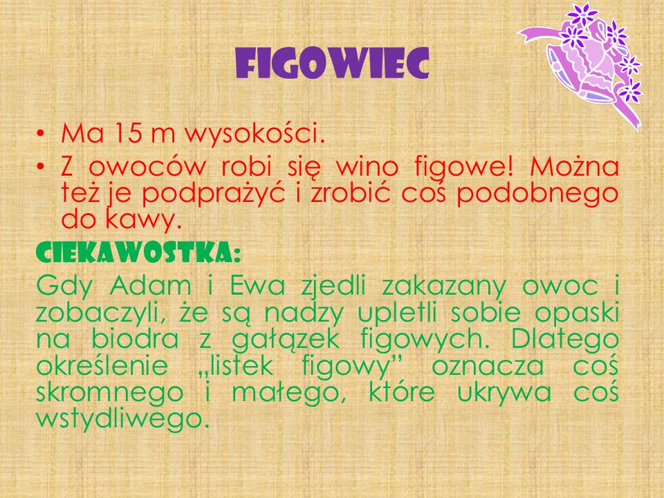 Figowiec Ma 15 m wysokości.
