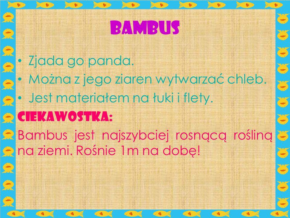 Bambus Zjada go panda. Można z jego ziaren wytwarzać chleb.