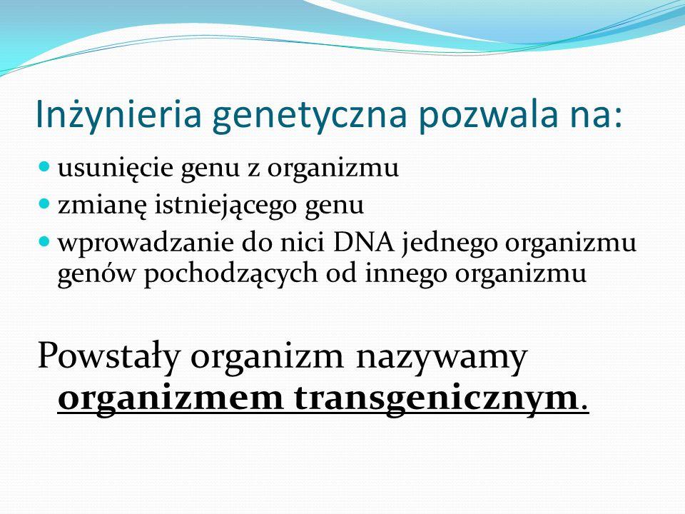 Inżynieria genetyczna pozwala na:
