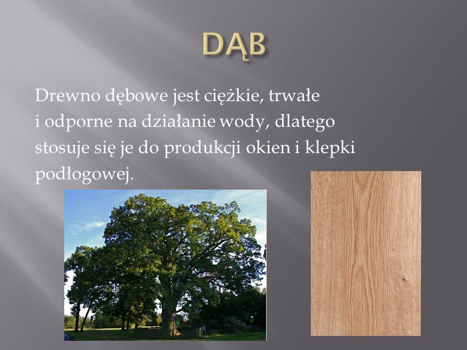 DĄB Drewno dębowe jest ciężkie, trwałe i odporne na działanie wody, dlatego stosuje się je do produkcji okien i klepki podłogowej.