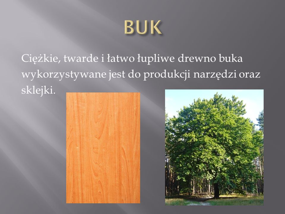 BUK Ciężkie, twarde i łatwo łupliwe drewno buka wykorzystywane jest do produkcji narzędzi oraz sklejki.