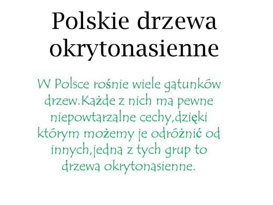 Polskie drzewa okrytonasienne