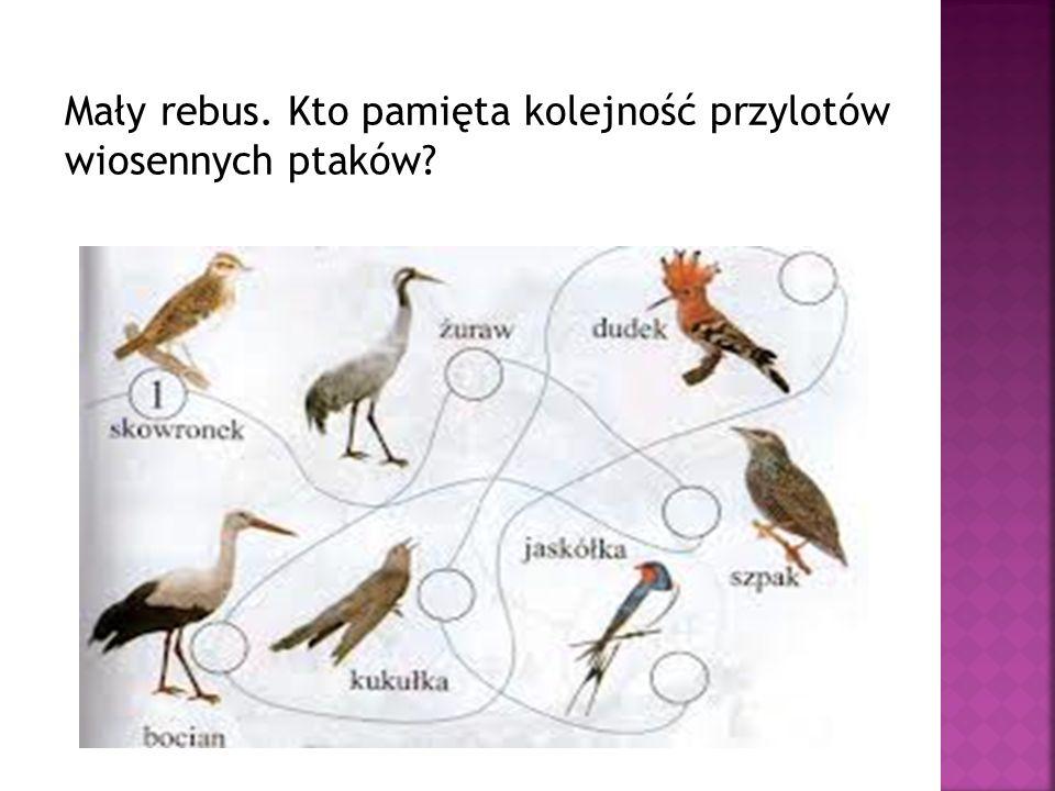 Mały rebus. Kto pamięta kolejność przylotów wiosennych ptaków