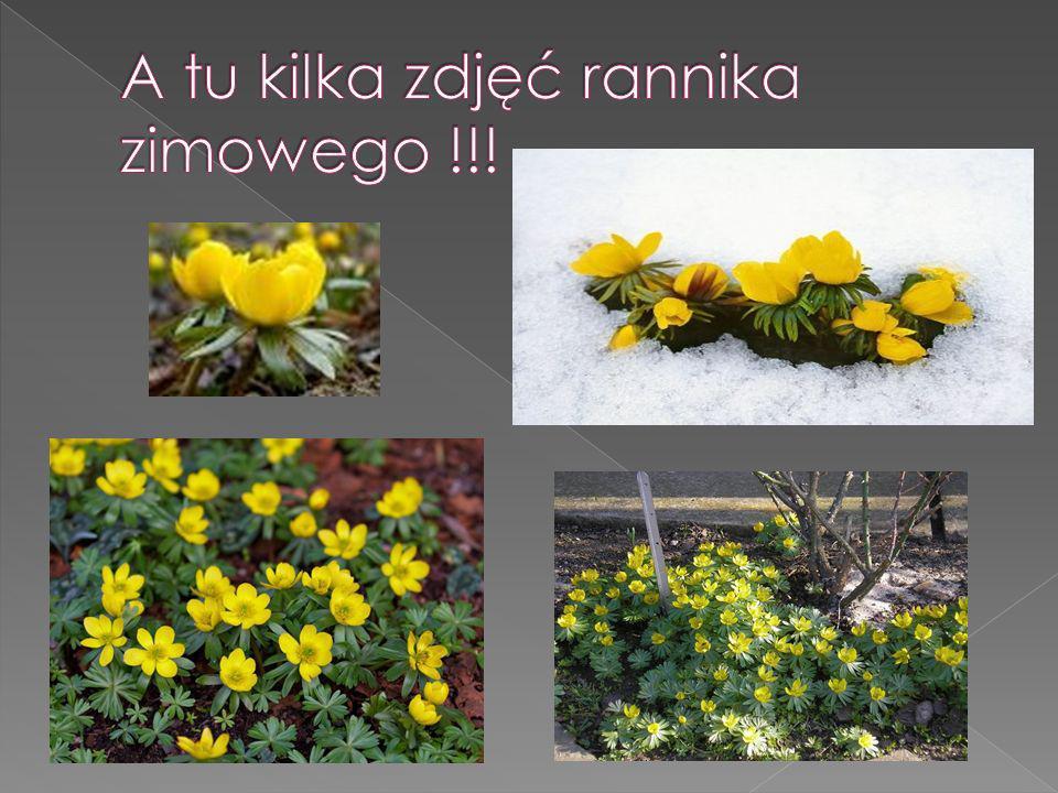 A tu kilka zdjęć rannika zimowego !!!