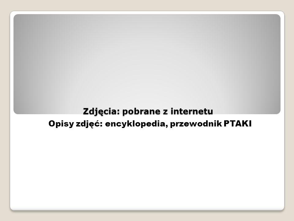 Zdjęcia: pobrane z internetu