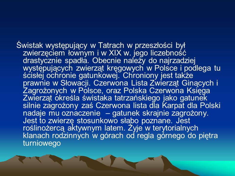 Świstak występujący w Tatrach w przeszłości był zwierzęciem łownym i w XIX w.
