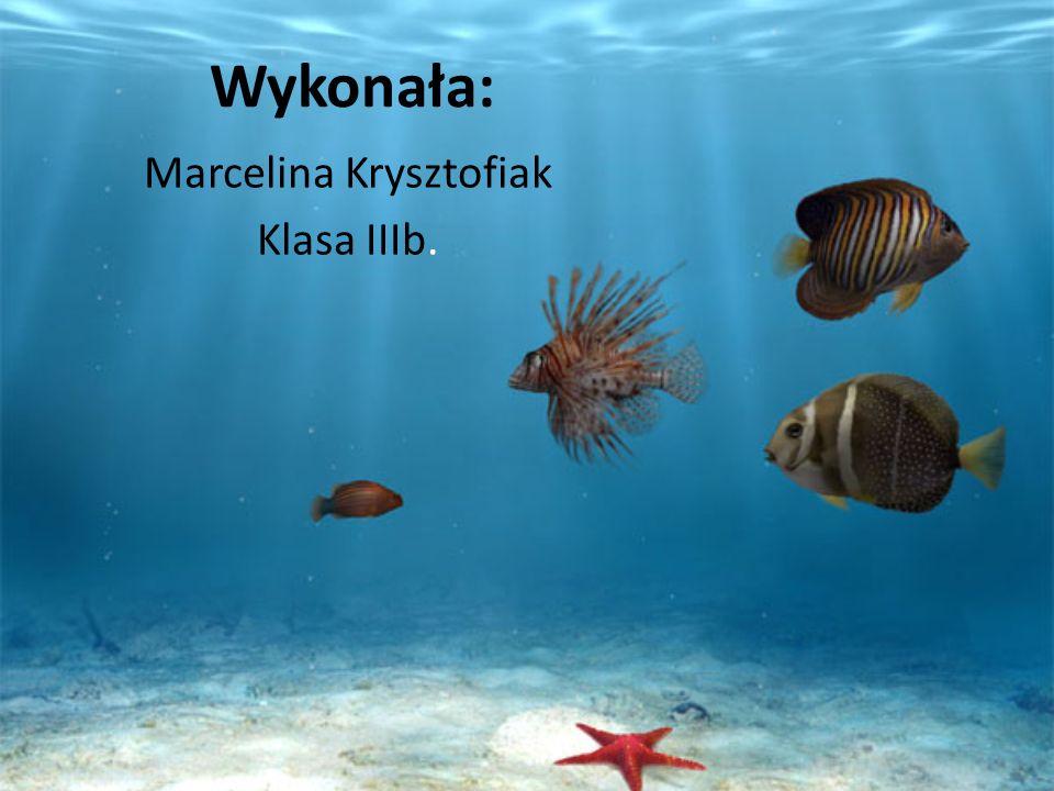 Marcelina Krysztofiak Klasa IIIb.