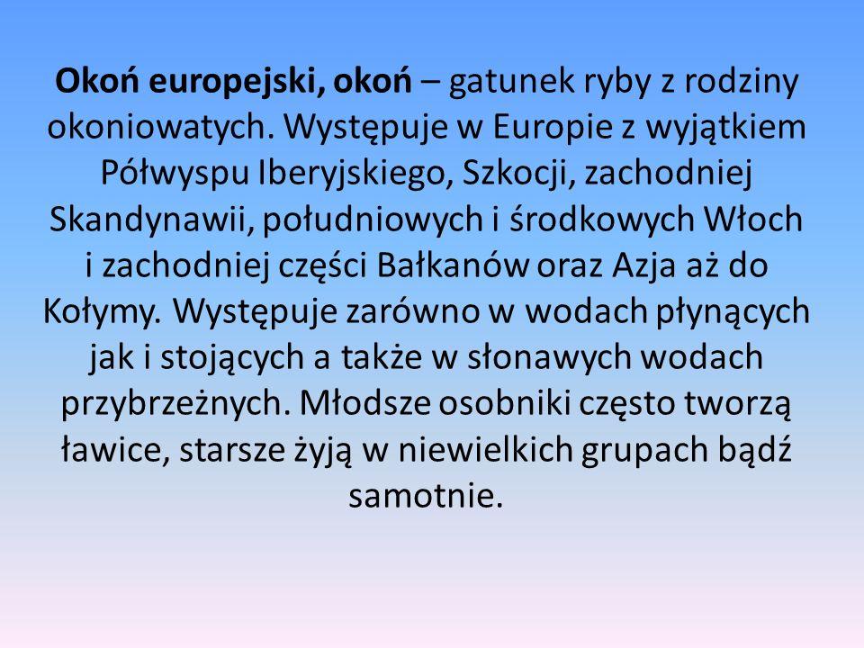 Okoń europejski, okoń – gatunek ryby z rodziny okoniowatych