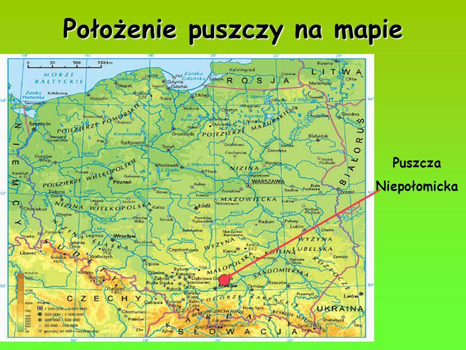 Położenie puszczy na mapie