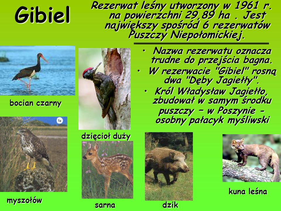 Gibiel Rezerwat leśny utworzony w 1961 r. na powierzchni 29,89 ha . Jest największy spośród 6 rezerwatów Puszczy Niepołomickiej.