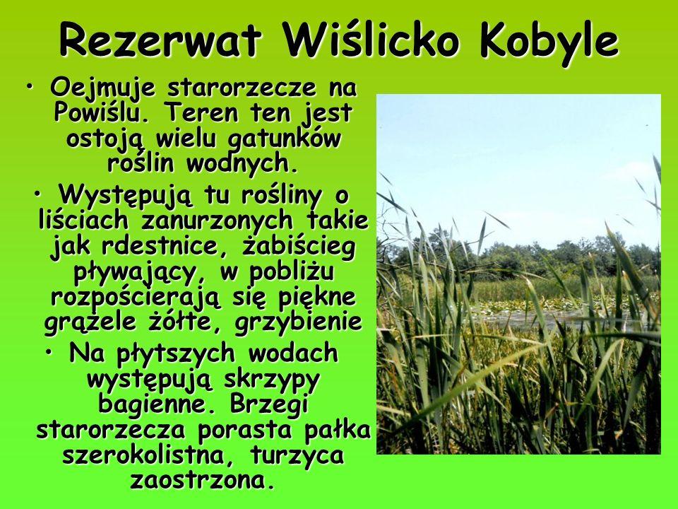 Rezerwat Wiślicko Kobyle