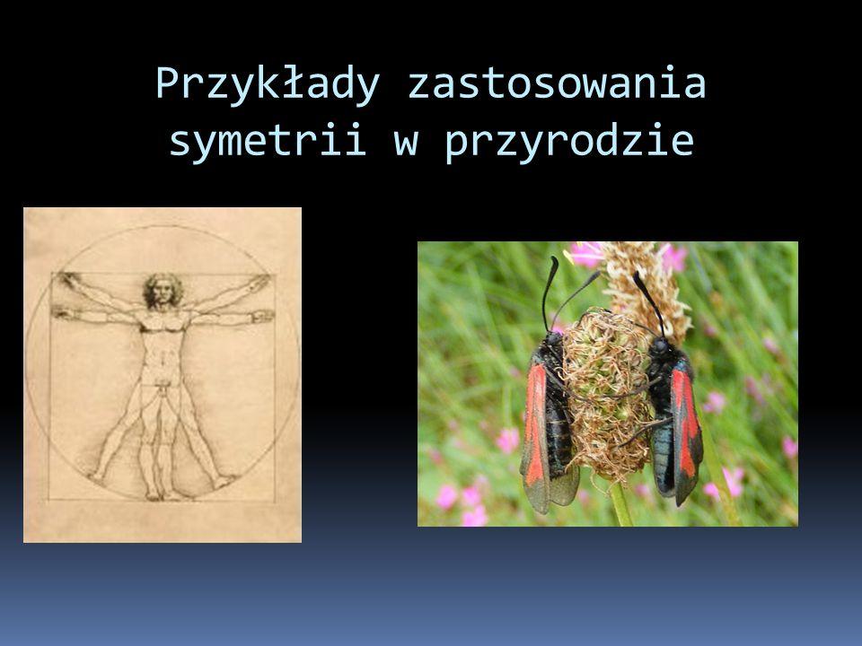 Przykłady zastosowania symetrii w przyrodzie