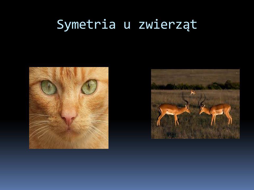 Symetria u zwierząt