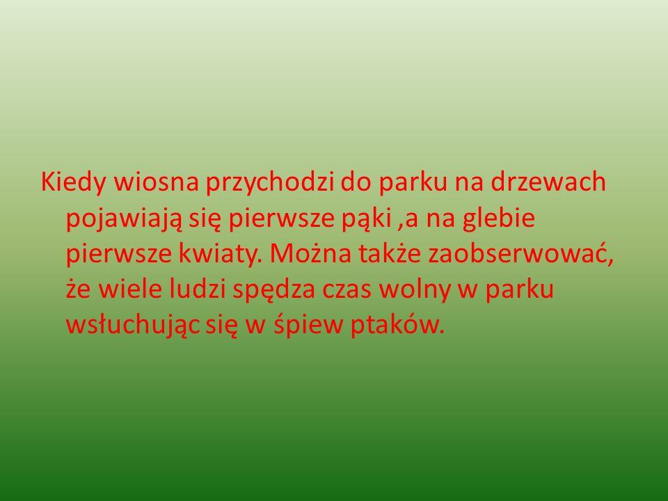 Kiedy wiosna przychodzi do parku na drzewach pojawiają się pierwsze pąki ,a na glebie pierwsze kwiaty.